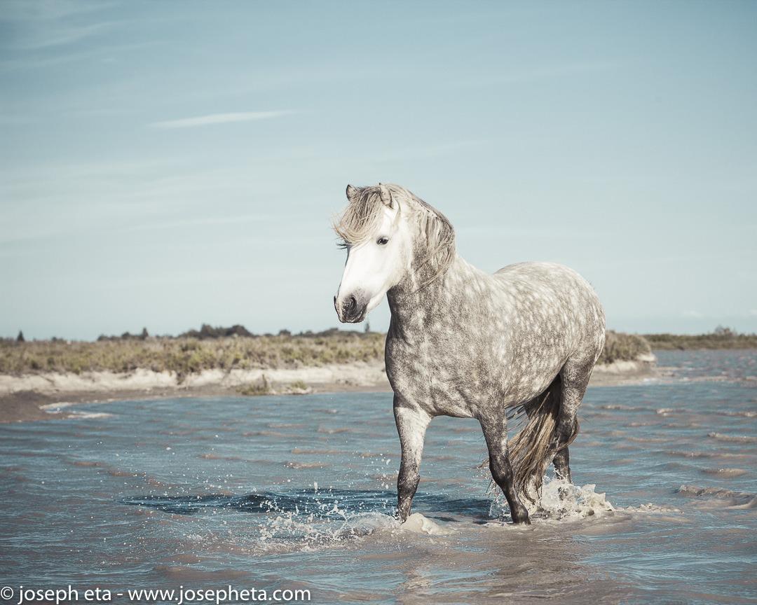A Licutano Stallion strolling in a lagoon.