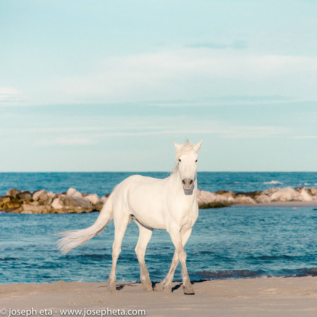 Why horse at the beach
